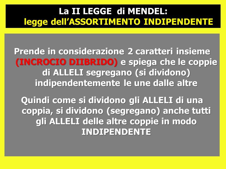 La II LEGGE di MENDEL: legge dell'ASSORTIMENTO INDIPENDENTE