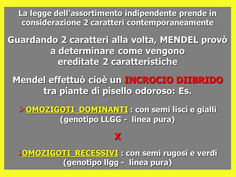 La legge dell'assortimento indipendente prende in considerazione 2 caratteri contemporaneamente