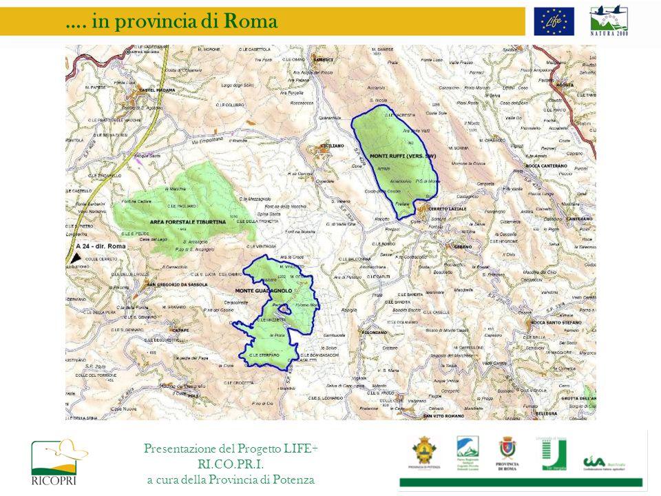 …. in provincia di Roma Presentazione del Progetto LIFE+ RI.CO.PR.I.
