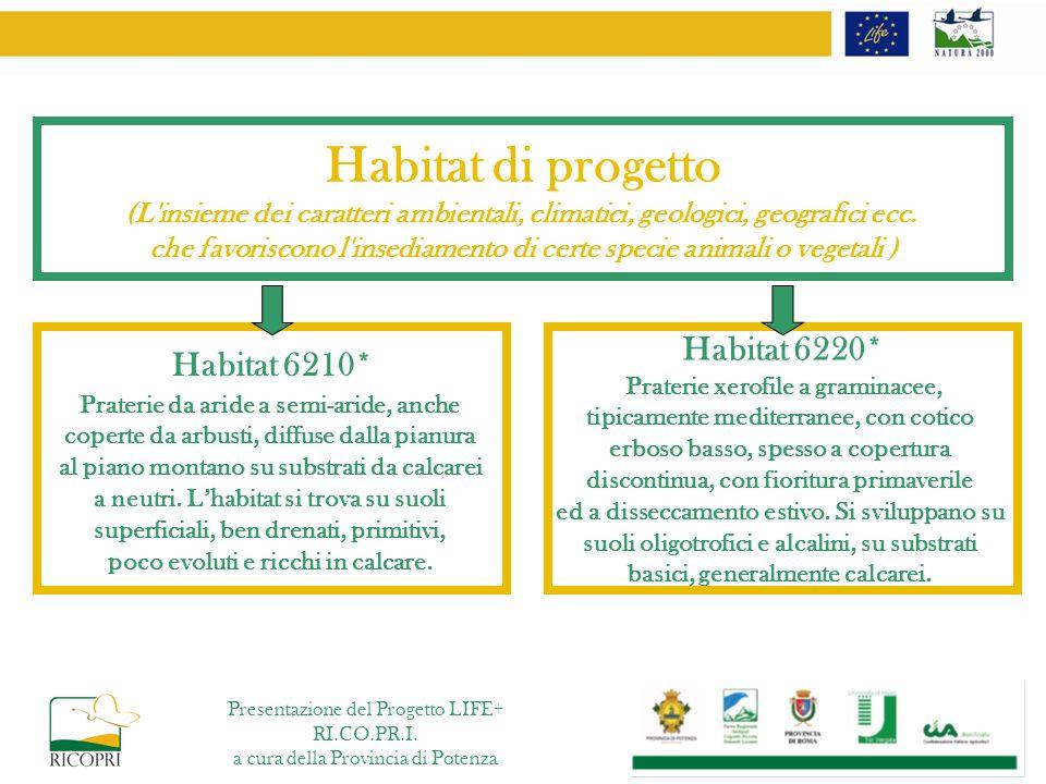 Habitat di progetto Habitat 6220* Habitat 6210*