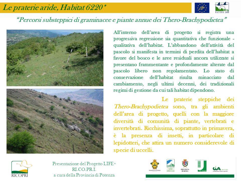 Le praterie aride, Habitat 6220*