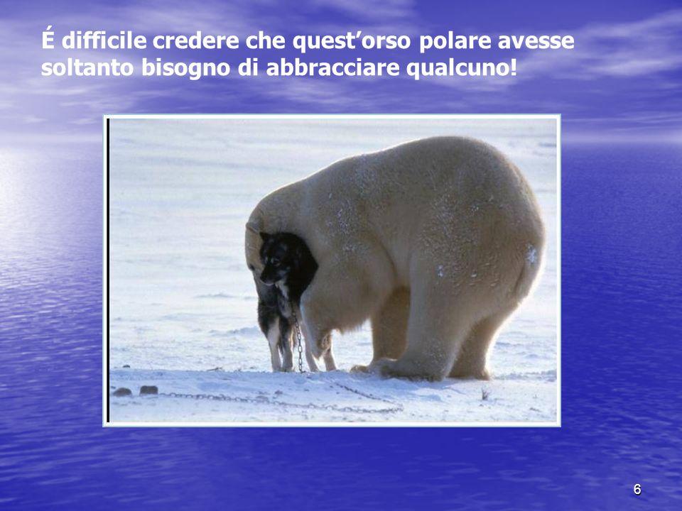 É difficile credere che quest'orso polare avesse soltanto bisogno di abbracciare qualcuno!