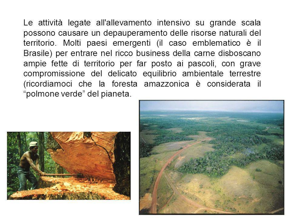 Le attività legate all allevamento intensivo su grande scala possono causare un depauperamento delle risorse naturali del territorio.