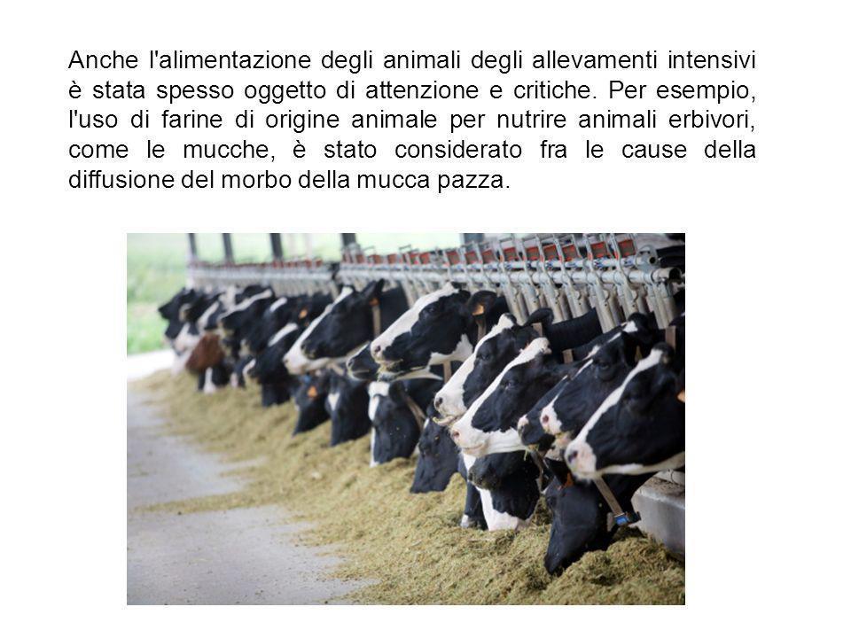 Anche l alimentazione degli animali degli allevamenti intensivi è stata spesso oggetto di attenzione e critiche.