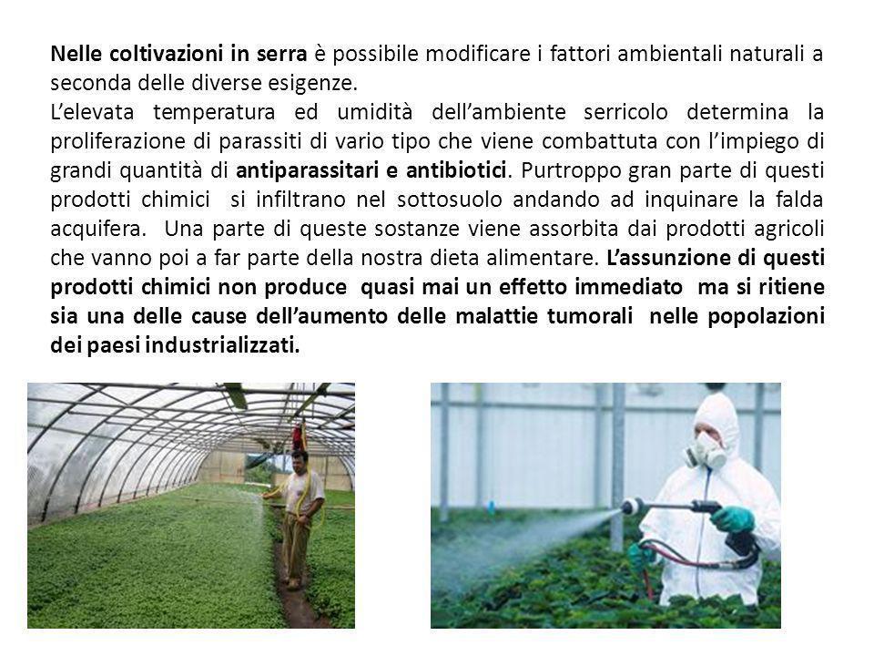 Nelle coltivazioni in serra è possibile modificare i fattori ambientali naturali a seconda delle diverse esigenze.