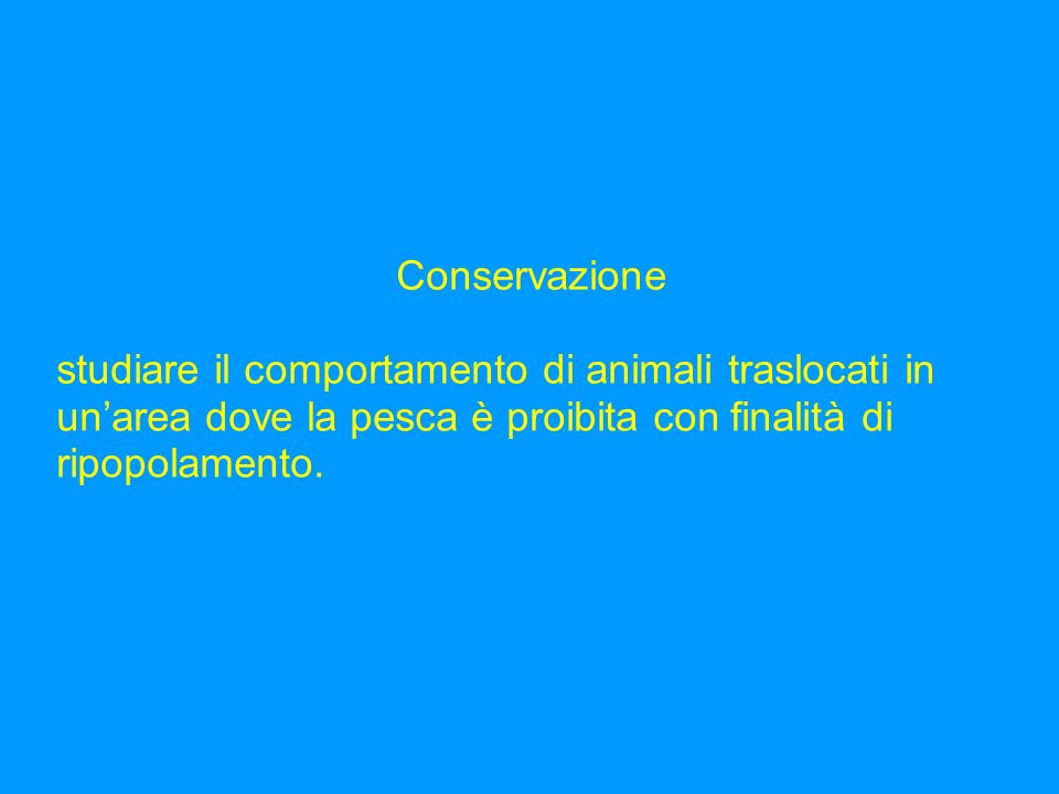 Conservazione studiare il comportamento di animali traslocati in un'area dove la pesca è proibita con finalità di ripopolamento.
