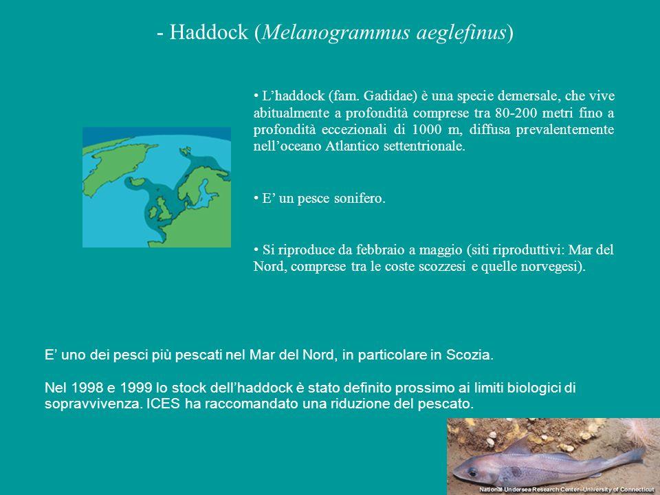 - Haddock (Melanogrammus aeglefinus)