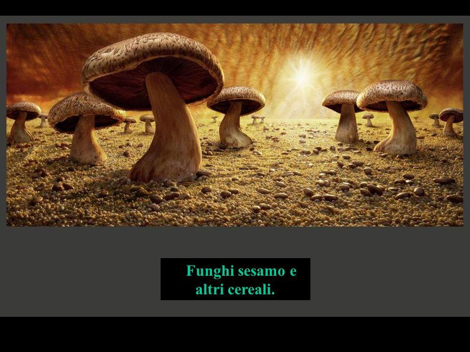 Funghi sesamo e altri cereali.