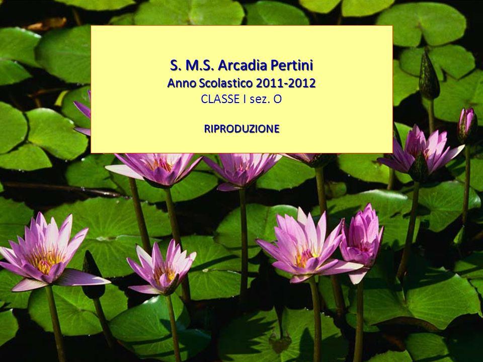 S. M.S. Arcadia Pertini Anno Scolastico 2011-2012 CLASSE I sez. O