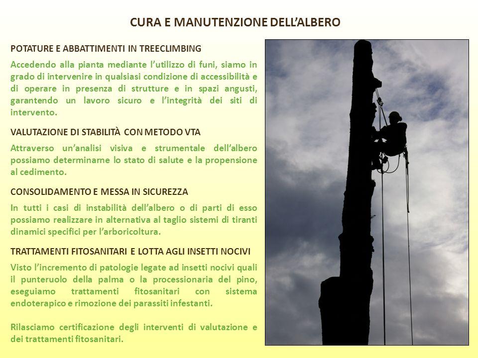 CURA E MANUTENZIONE DELL'ALBERO