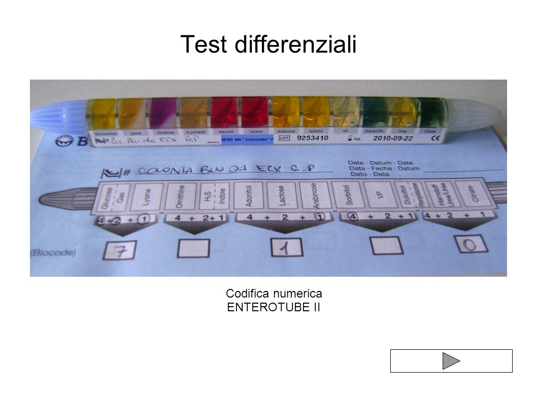 Test differenziali Codifica numerica ENTEROTUBE II