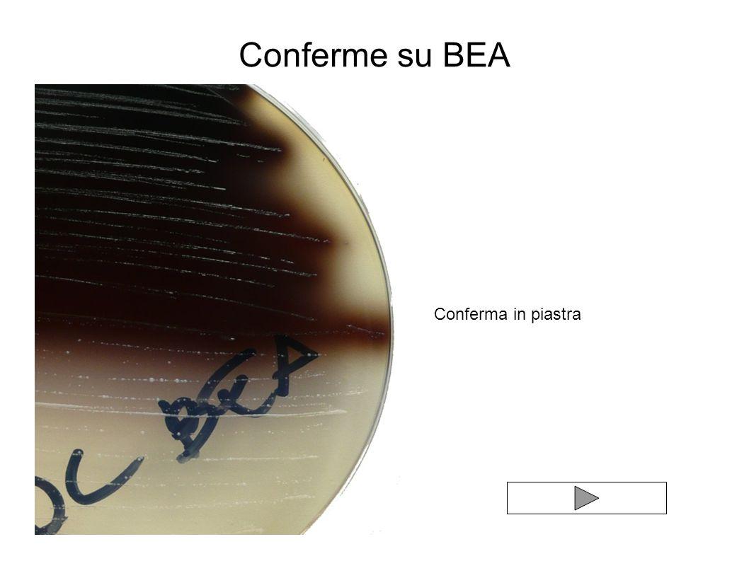 Conferme su BEA Conferma in piastra