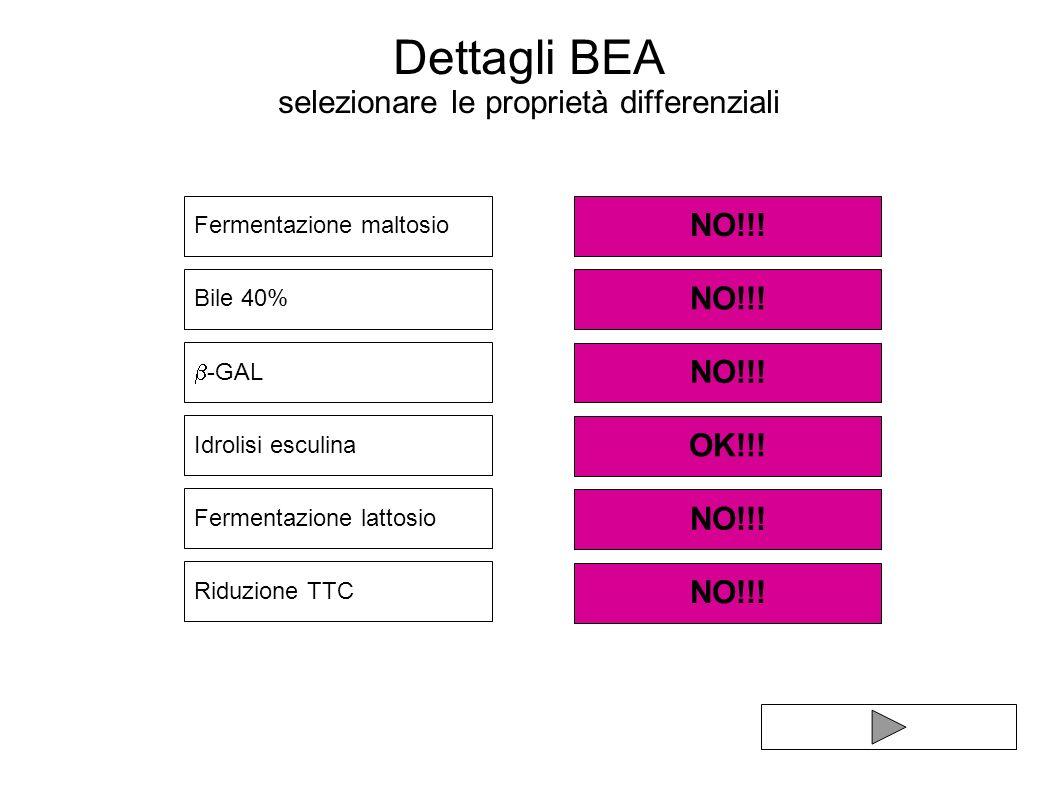 Dettagli BEA selezionare le proprietà differenziali