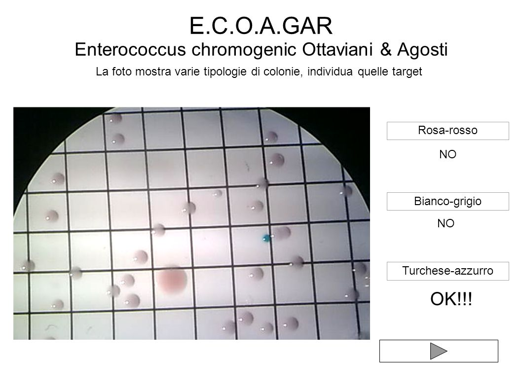 E.C.O.A.GAR Enterococcus chromogenic Ottaviani & Agosti