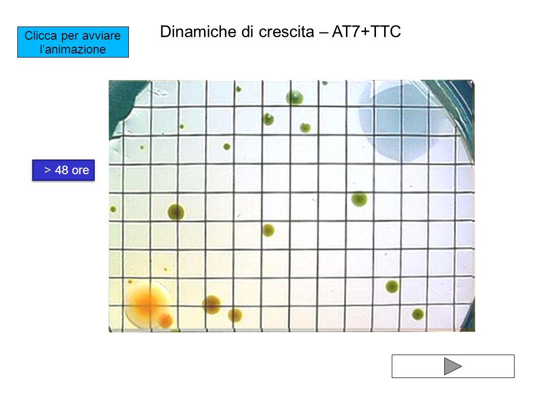 Dinamiche di crescita – AT7+TTC