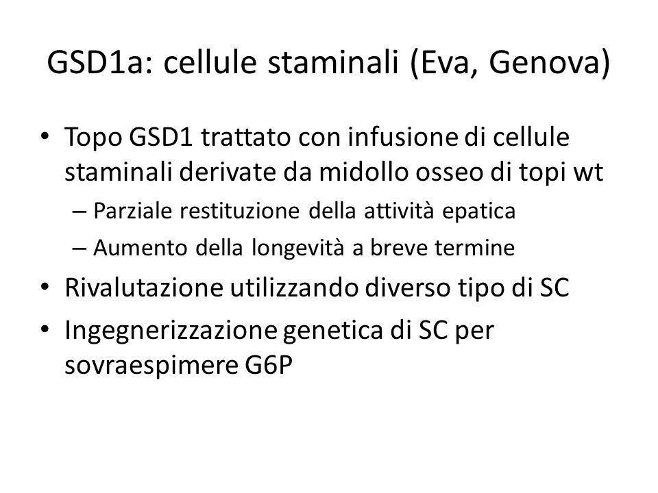 GSD1a: cellule staminali (Eva, Genova)