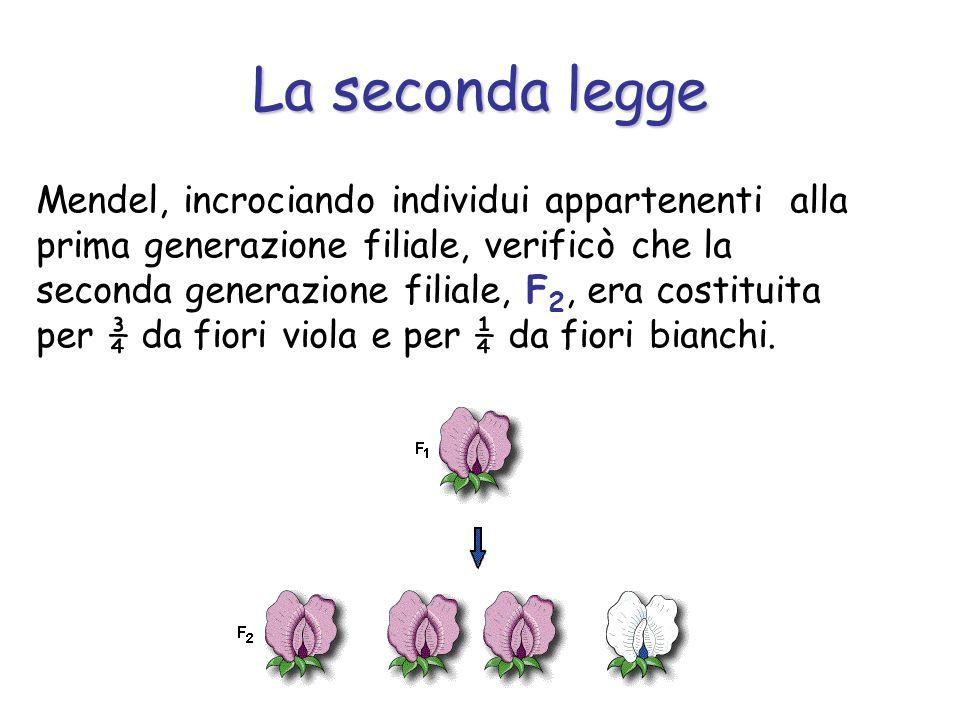 La seconda legge