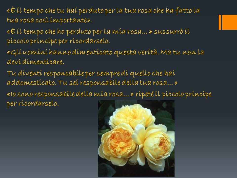«È il tempo che tu hai perduto per la tua rosa che ha fatto la tua rosa così importante».