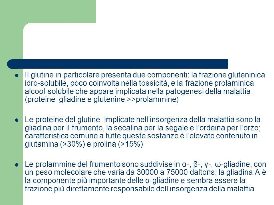 Il glutine in particolare presenta due componenti: la frazione gluteninica idro-solubile, poco coinvolta nella tossicità, e la frazione prolaminica alcool-solubile che appare implicata nella patogenesi della malattia (proteine gliadine e glutenine >>prolammine)
