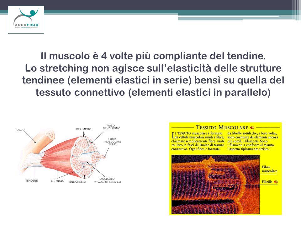 Il muscolo è 4 volte più compliante del tendine