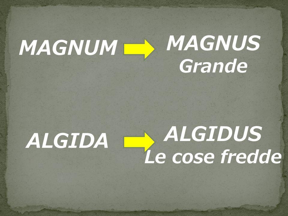 MAGNUS MAGNUM ALGIDUS ALGIDA