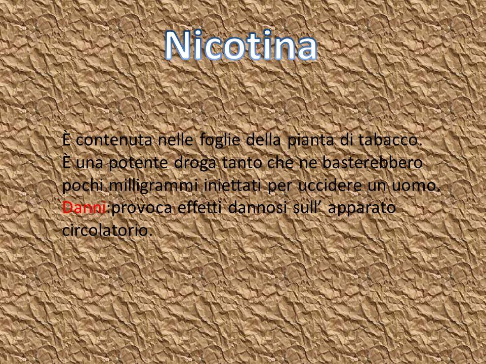 Nicotina È contenuta nelle foglie della pianta di tabacco.