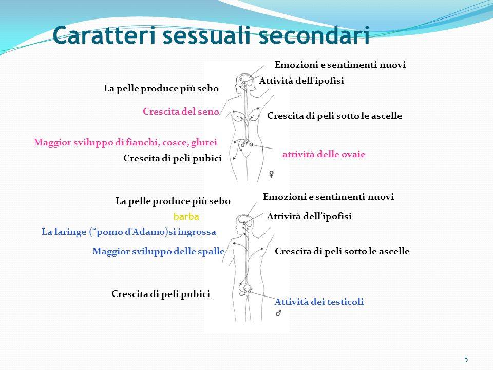 Caratteri sessuali secondari