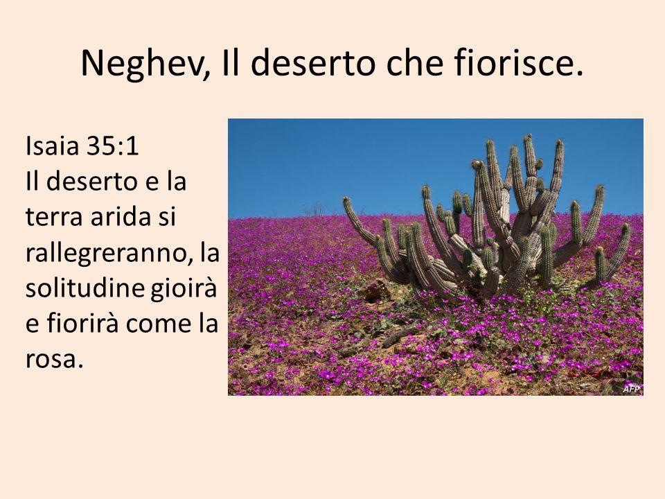 Neghev, Il deserto che fiorisce.