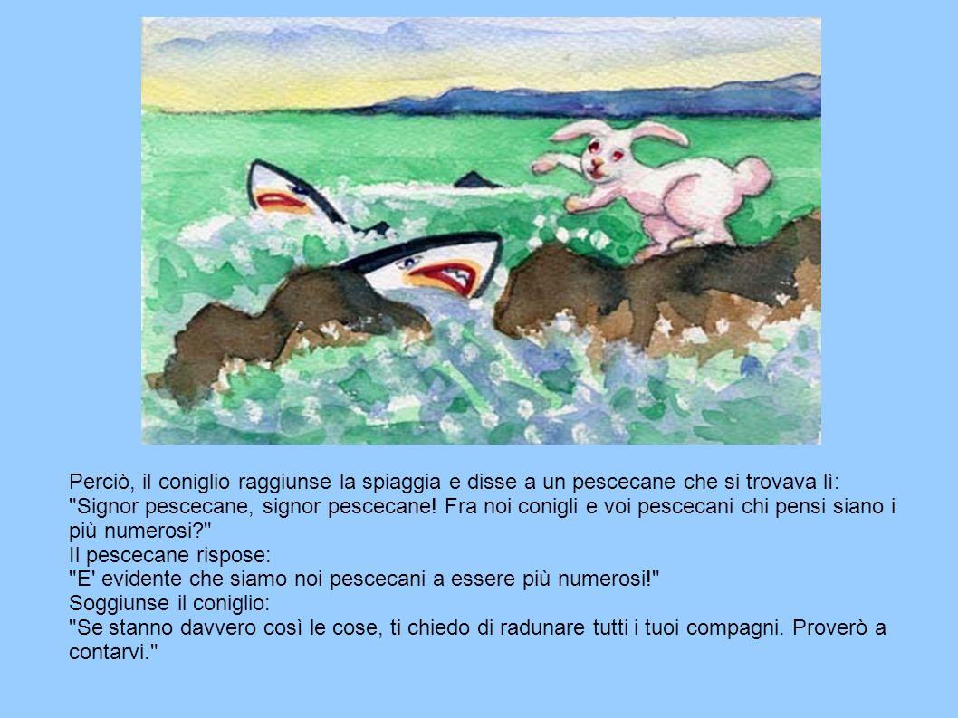 Perciò, il coniglio raggiunse la spiaggia e disse a un pescecane che si trovava lì: Signor pescecane, signor pescecane.