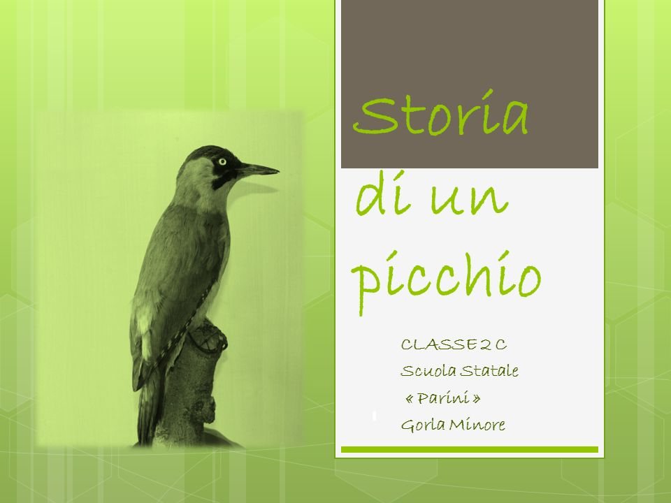 CLASSE 2 C Scuola Statale « Parini » Gorla Minore
