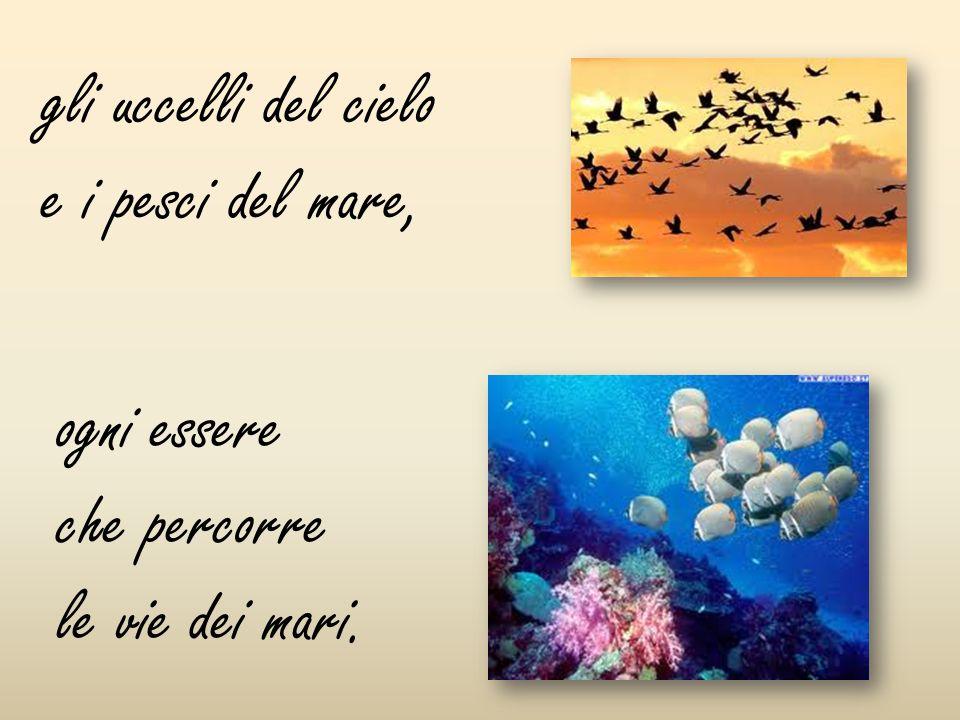 gli uccelli del cielo e i pesci del mare,