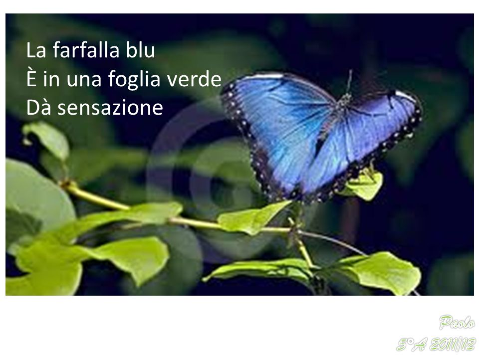 La farfalla blu È in una foglia verde Dà sensazione Paolo 5°A 2011/12