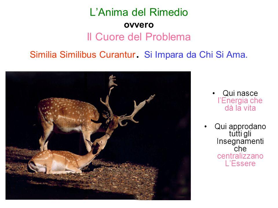 L'Anima del Rimedio ovvero Il Cuore del Problema Similia Similibus Curantur. Si Impara da Chi Si Ama.