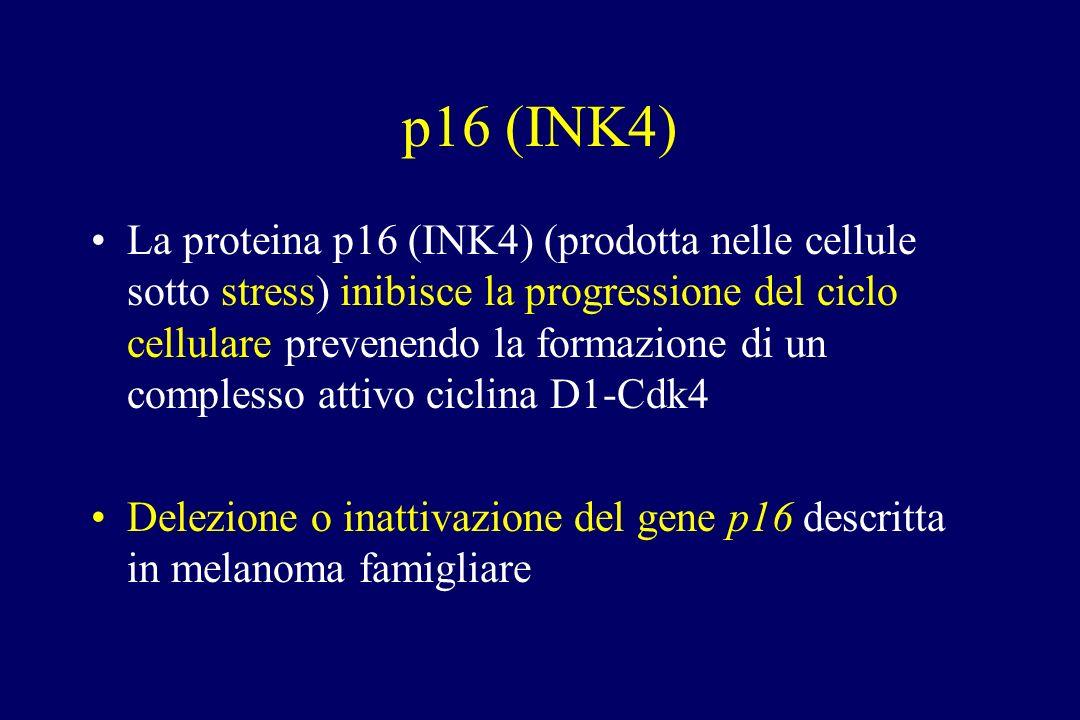 p16 (INK4)