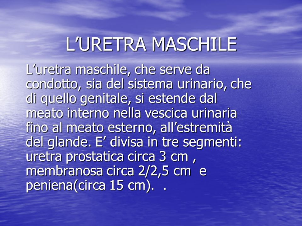 L'URETRA MASCHILE