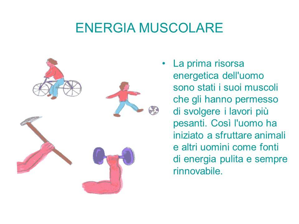 ENERGIA MUSCOLARE