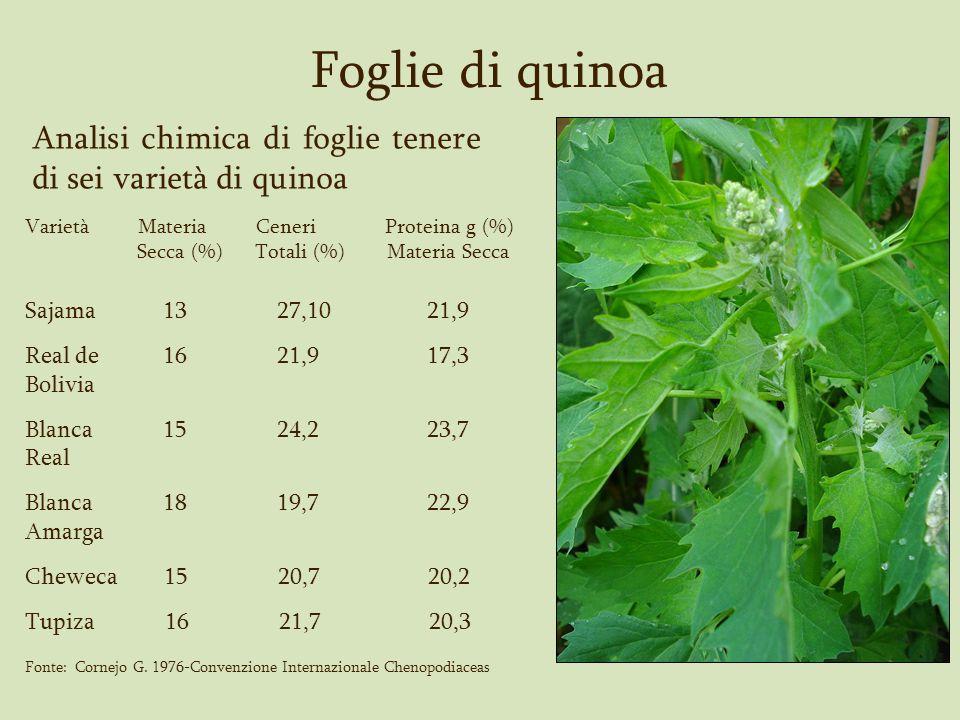 Foglie di quinoa Analisi chimica di foglie tenere di sei varietà di quinoa. Varietà Materia Ceneri Proteina g (%)