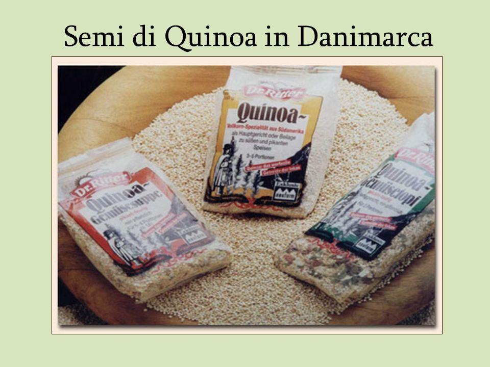 Semi di Quinoa in Danimarca