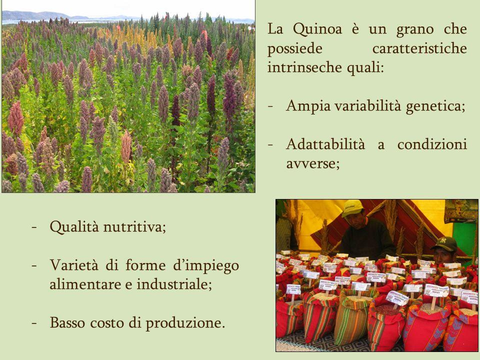 La Quinoa è un grano che possiede caratteristiche intrinseche quali: