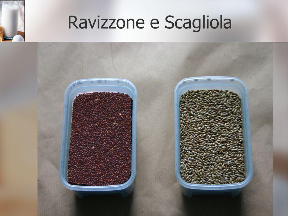 Ravizzone e Scagliola
