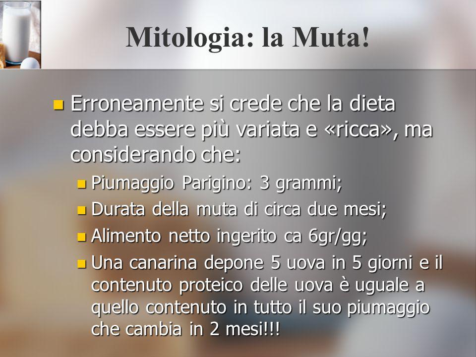 Mitologia: la Muta! Erroneamente si crede che la dieta debba essere più variata e «ricca», ma considerando che: