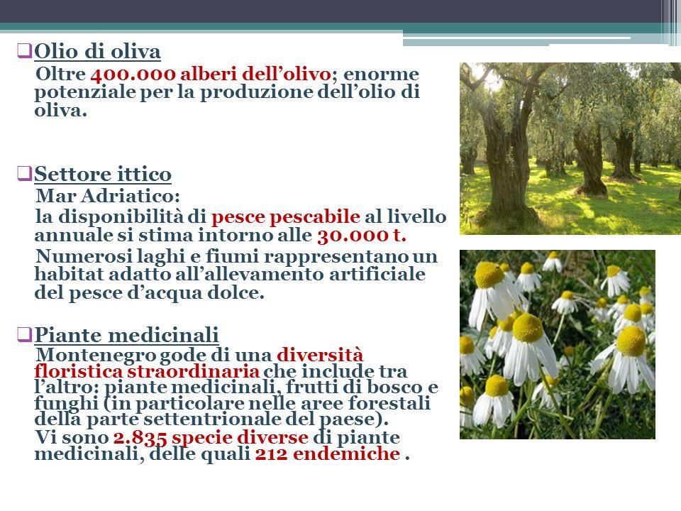 Olio di oliva Settore ittico Piante medicinali