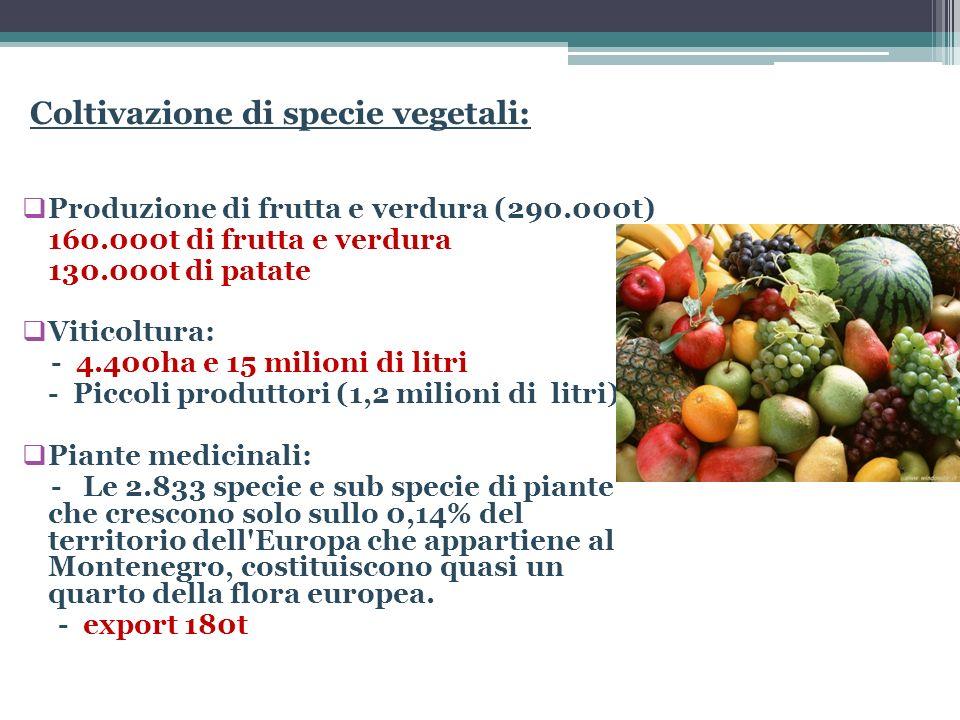 Coltivazione di specie vegetali: