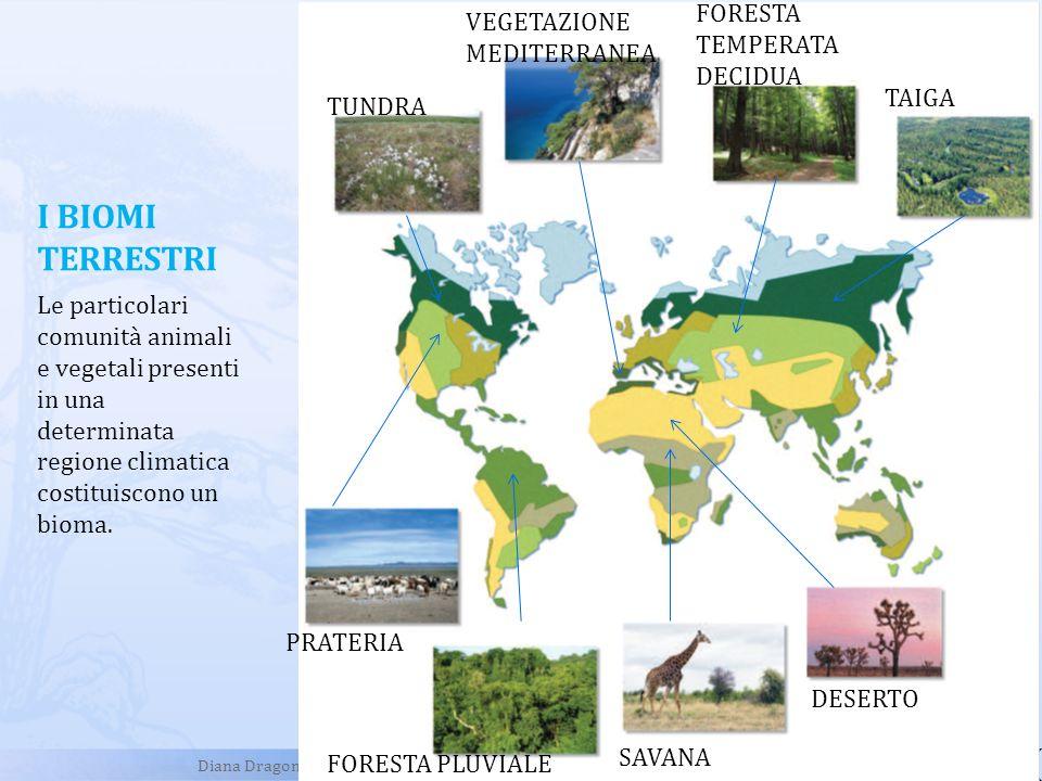 I BIOMI TERRESTRI FORESTA TEMPERATA DECIDUA VEGETAZIONE MEDITERRANEA