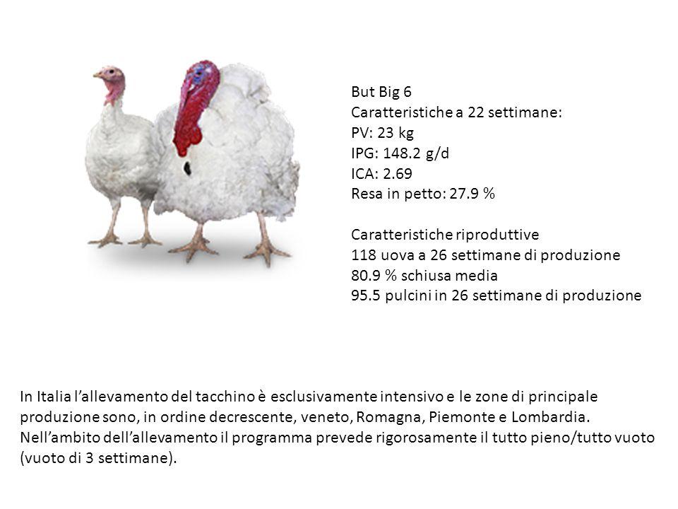 But Big 6 Caratteristiche a 22 settimane: PV: 23 kg. IPG: 148.2 g/d. ICA: 2.69. Resa in petto: 27.9 %