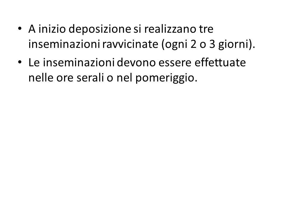 A inizio deposizione si realizzano tre inseminazioni ravvicinate (ogni 2 o 3 giorni).