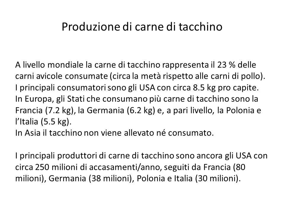 Produzione di carne di tacchino