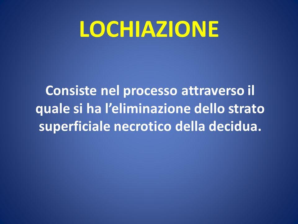 LOCHIAZIONE Consiste nel processo attraverso il quale si ha l'eliminazione dello strato superficiale necrotico della decidua.