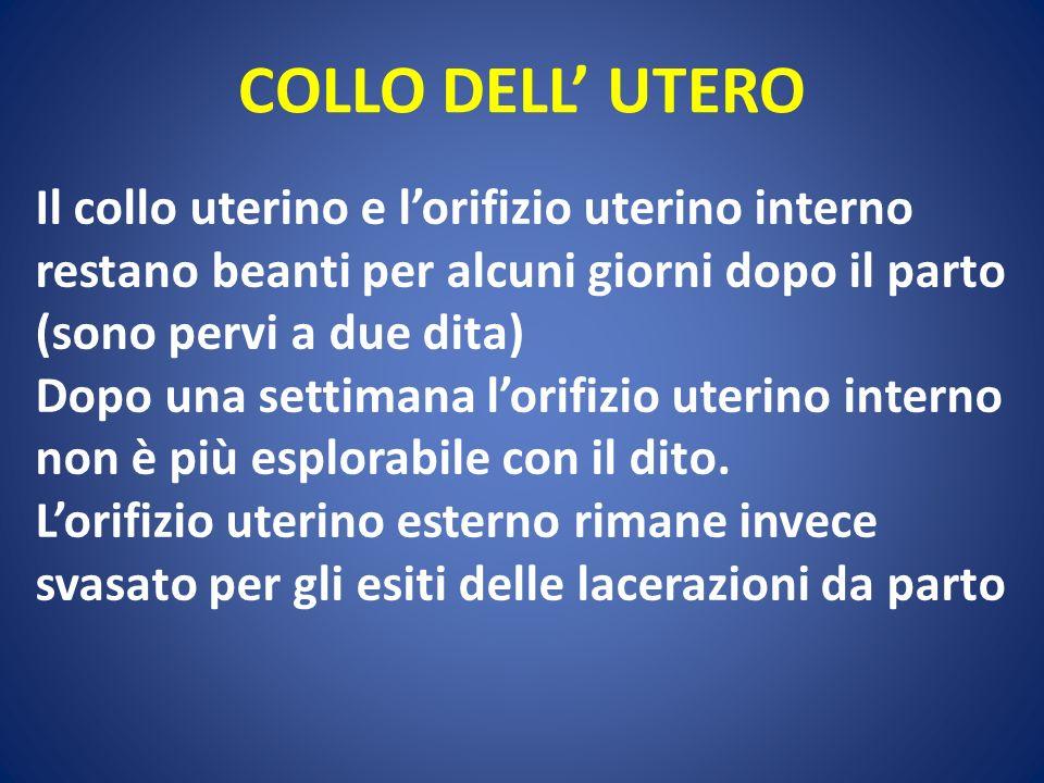 COLLO DELL' UTERO Il collo uterino e l'orifizio uterino interno restano beanti per alcuni giorni dopo il parto (sono pervi a due dita)