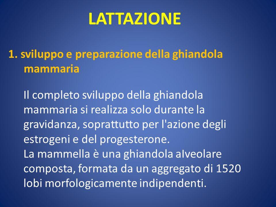 LATTAZIONE 1. sviluppo e preparazione della ghiandola mammaria